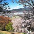 ★弘法山の山桜(松本市) 2018
