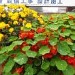 元気な花壇の花