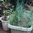 あと少しで終わる夏野菜苗植え!