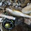 15日の モンロー谷 北陸釣り行続き