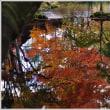 軽井沢 「雲場池」 の紅葉 (3の1) ★ 2018.11.13 ★