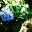 暑くて草花もバテバテ