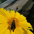 蟷螂と挵蝶