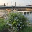 境川の早朝散歩で見つけた素敵な風景