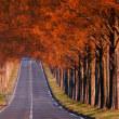 メタセコイア並木道の紅葉 II