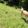 赤松林散歩 180521