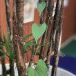 観葉植物に恋??