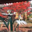 浄真寺さんの紅葉