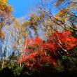 『谷戸川渓谷』 紅葉の谷