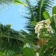 ハワイとハワイでみな家族+゚。*(*´∀`*)*。゚+