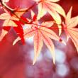 秋色ものがたり(Ⅴ)