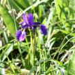 長野県東御市の北東部にある池の平湿原では、これからはヤナギランなどが咲き始めます