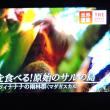 9/20 マダガスカルの青酸カリを食べるサル