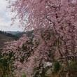 大川村の桜まつりへツーリング