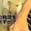 犬の旅立ちを見送る猫に泣けた!