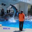 イルカ・ショー(海きらら)
