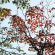 いずこも同じ秋の風景