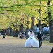 昭和記念公園のイチョウ並木・・3
