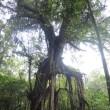 インドネシア・バリ島 「聖なる場所」、あるいはパワースポット