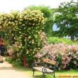 信州・中野 一本木公園のバラまつり(英国式庭園)へ……!