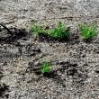 誰やー 庭に雑草を植えたのは!!!
