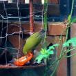 寒さと共に野鳥がやってきました!・・・メジロ ヒヨドリ 餌付け