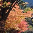 今治市玉川町の鈍川渓谷が紅葉しています