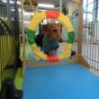 今日は「犬の整体Day」! 犬のしつけ教室@アロハドギー