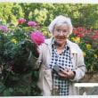 ブルームーンの薔薇に「ミセステーラー」と名付けました・・・