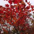 秋、深まる小松原へ