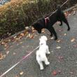 ルル子ちゃんの散歩