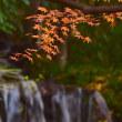 名主の滝の紅葉