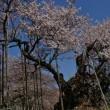 3月31日山梨県北杜市と秩父の桜