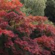 12月14日 竹に紅葉