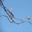 欅の枝落とし・人工芝・梅花・ユリノキ