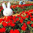佐倉ふるさと広場の春