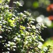 春の日差しで「玉ボケ」撮影