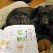 パートナーにも薬膳ご飯!-愛犬と飼い主さんのための薬膳セミナー:導入編-@大阪 のお知らせ