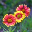 琉球大田焼窯元 ☆平良幸春花の写真集 うるま市天顔川沿いの花
