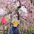 京都2019_3月:北野天満宮の梅