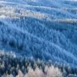 霧氷を撮る