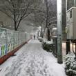 東京都は大雪です