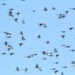 湿原を飛ぶ 1