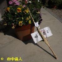吉隠・結鎮祭の弓矢とごーさん