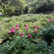 「龍寳寺」は花の寺