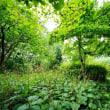 竹林とミズヒキ(赤塚植物園)