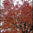 朝の風景・名残りの紅葉