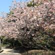 新緑の季節:舞鶴公園
