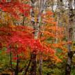 八千穂高原の紅葉