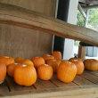 かぼちゃゴロゴロ‼